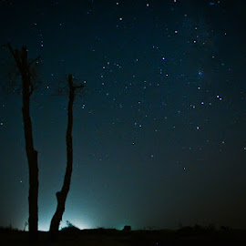Standing alone under stars by Emraan Bhatti - Nature Up Close Other Natural Objects ( #plant, #nightphotography, #desert, #stars )