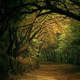 enlightened from heaven by Jose Luis Mendez Fernandez - Nature Up Close Trees & Bushes ( path, sunrays, trees, forest, shadows, secret, fantasy, secret garden, secret path, secret door )