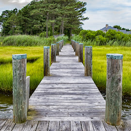 The Dock by Carol Ward - Buildings & Architecture Bridges & Suspended Structures ( boat dock, sea grass, waterscape, south point md, seascape, dock )