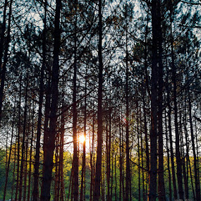 S by Lilian Iatco - Landscapes Forests ( sunset, forest, light, spring, shadows )