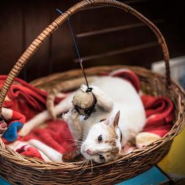 No.... It's mine. by Vijay Rawale - Animals - Cats Playing ( candid movement, playing, kitten, pet, bucket )