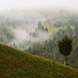 loneliness by Rux Georgescu - Landscapes Mountains & Hills ( mountains, nature, romania, landscapes, transylvania )