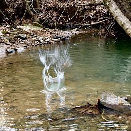 Water splash by Amanda Burton - Abstract Water Drops & Splashes ( water, splashes )