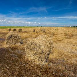Paddy rolls by Jie Jack - Landscapes Prairies, Meadows & Fields ( roll, blue sky, paddy field, paddy rolls, paddy, cloudy, rolls, sekinchan, paddy roll )
