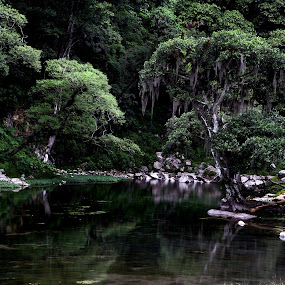 Reflection and mountain by Cristobal Garciaferro Rubio - Nature Up Close Trees & Bushes