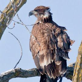 by Steven Burki - Animals Birds ( perched birds )