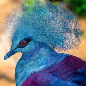 by Judy Rosanno - Animals Birds ( san antonio zoo, june 2017,  )