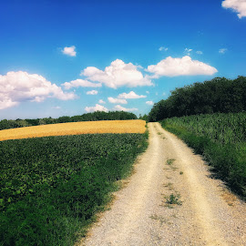 Path by Zachary Taylor - Instagram & Mobile Android ( clouds, wheat, mobilography, green, yelow, path )