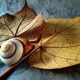 Leaves and seashell by Janette Ho - Artistic Objects Still Life