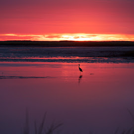 solitude by Mike Mulligan - Nature Up Close Water ( bird, red, dawn, nature, sunrise )