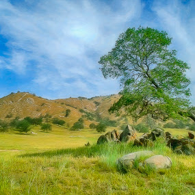 Spring Ville by Danny Bruza - Landscapes Prairies, Meadows & Fields ( spring ville, tree, digital art painting, tulare,  )