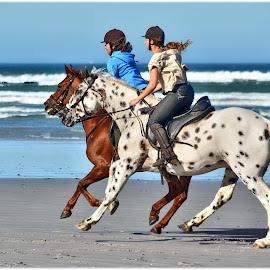 Early morning beach ride by Glenn Visser - Animals Horses ( ride, horses, beach )
