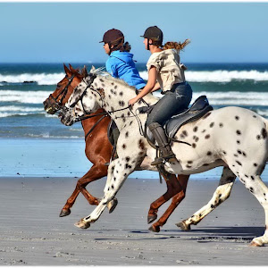FB_Horses_Both_2016-01-10_02_NoSign.jpg