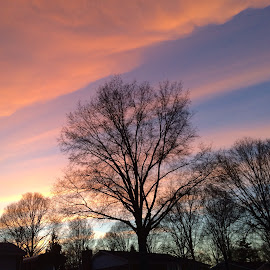 All Natural Cotton Candy Sky by Lora Shank - Landscapes Cloud Formations ( clouds, purple, west virginia, colorful, beautiful, neighborhood, iphone, spring, sun, neighborhoods, sky, blue sky, tree, blue, iphoneonly, sunset, sunsets, skyporn, trees, pink, bare, springtime, skyscape,  )