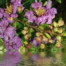 purple flowers by LADOCKi Elvira - Digital Art Things ( flowers, garden )