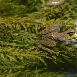 by Mallory Epping - Animals Amphibians
