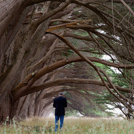 Passage Way by Debbie Hunt - Landscapes Forests ( trees, man, tunnel )