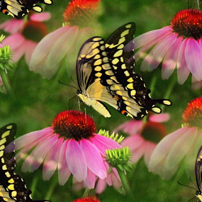 Butterfly on Echinacea - Seamless by Tina Dare - Digital Art Abstract ( echinacea, seamless, butterfly, nature, pink, insect,  )