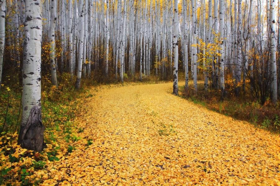 'Golden Road' by Ron Azevedo - Landscapes Forests