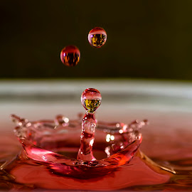 Water Droplets by Mihir Modi - Abstract Water Drops & Splashes ( water, liquid sculpture, reflection, waterdrop, splash, macro photography, rippled, liquid art, abtract, circle, bounce, droplets, colour, macro, liquid, fluid, motion )