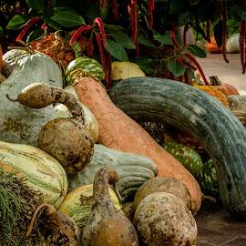 Pumpkins and Gords at the Arboretum by Teresa Husman - Nature Up Close Gardens & Produce ( dallas, pumpkins, arboretum )