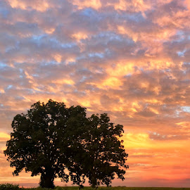 Kentucky Countryside at Sunset by Lorna Littrell - Instagram & Mobile iPhone ( sunset, silhouette, tree, orange sky, iphone, landscape )