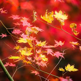 Autumn by Madhujith Venkatakrishna - Nature Up Close Other Natural Objects