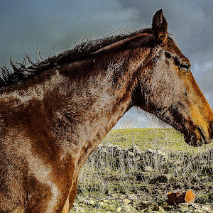 horse 9.jpg