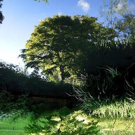 Upside down Tree by Helen Roberts - City,  Street & Park  City Parks