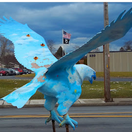 Eagle and Flag by Carol Boshears - Public Holidays July 4th
