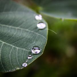 Nature up close... by Swapnil Keshari - Nature Up Close Leaves & Grasses ( nature, waterdrop, jungle, bestclick, leaves, waterdroplets, bestpic, rain,  )
