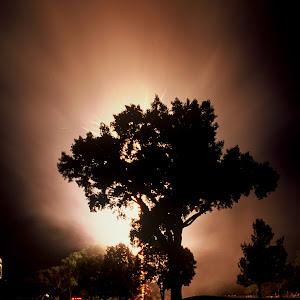 fireworks tree.JPG