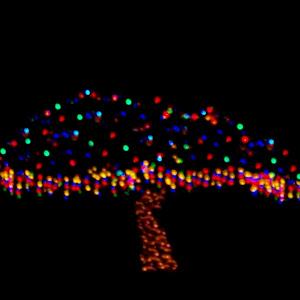 LJ FULLERTON 12 CHRISTMAS LIGHTS 122415.jpg
