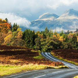 The Long and Winding Road by Peter Jarvis - Landscapes Mountains & Hills ( hills, mountains, cumbria, autumn, trees, langdale pikes, forest, road, elterwater )