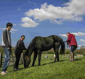 Horse grooming at Mares Farm, Old Amersham, Bucks