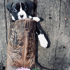 Zoey by Mindi Baum-sherlin - Animals - Dogs Portraits ( pet, puppy, cute, dog, domestic, flower, boots, animal )