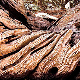 wood waves by Rachel Rachel - Abstract Patterns ( wood, lines, drift wood, weathered,  )