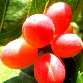 Fruit named as KORZAH by Saurav Choudhury - Food & Drink Fruits & Vegetables