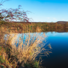 Scenic View over a lake. by Johannes Oehl - Landscapes Waterscapes ( water, plant, baden-wuerttemberg, europe, reflections, lake, scenic, aalkistensee, morning, landscape, idyll, sky, tree, nature, blue, color, maulbronn, outdoor, trees, brown, germany, view, scenery )