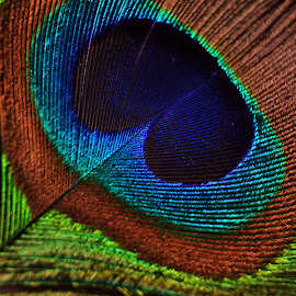 Artistic patterns by Prasanta Das - Artistic Objects Other Objects ( patterns, aristic, peacock feather )
