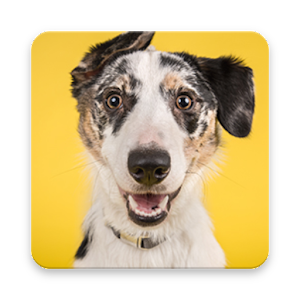 Download Dog Information App For PC Windows and Mac