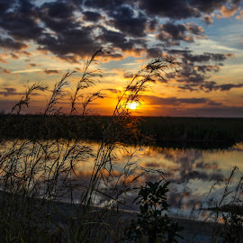 Sunset Over The Glades by Aaron Whitaker - Landscapes Sunsets & Sunrises ( reflection, sunset, meadow, swamp, sun )