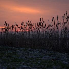 by Robert Gartner - Landscapes Sunsets & Sunrises