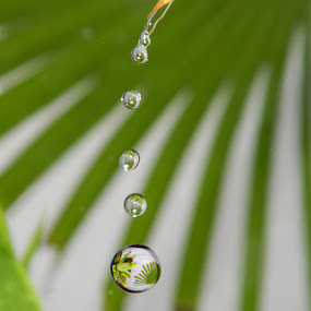 Water drops by Divnoor Buttar - Abstract Water Drops & Splashes ( water, water reflection, water drops, water on plants, rain )