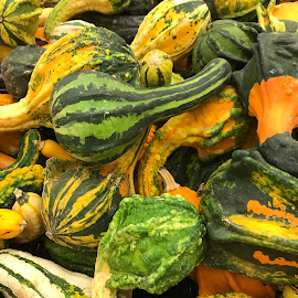 Harvest Of Gourds by Lorna Littrell - Instagram & Mobile iPhone ( autumn, food, fall, gourds, harvest )