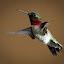 Hum by Todd Wallarab - Animals Birds ( bird, huming, wing, fly, fast, small, humming bird, hummer )