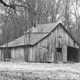 Still Standing by Rick Covert - Buildings & Architecture Decaying & Abandoned ( winter, black and white, barns, rustic, arkansas )