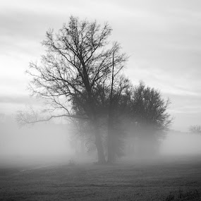 Smokey Meadow by Matthew Lindsey - Landscapes Prairies, Meadows & Fields ( mist and trees, misty meadow, black and white, trees, pwcbwlandscapes, mist )