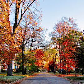 Granger Street by Howard Sharper - City,  Street & Park  Street Scenes ( cityscapes, neighborhoods, autumn leaves, autumn, autumn colors, street scene, city )