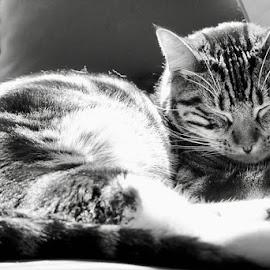Peaceful Kitty by Lori Fix - Black & White Animals